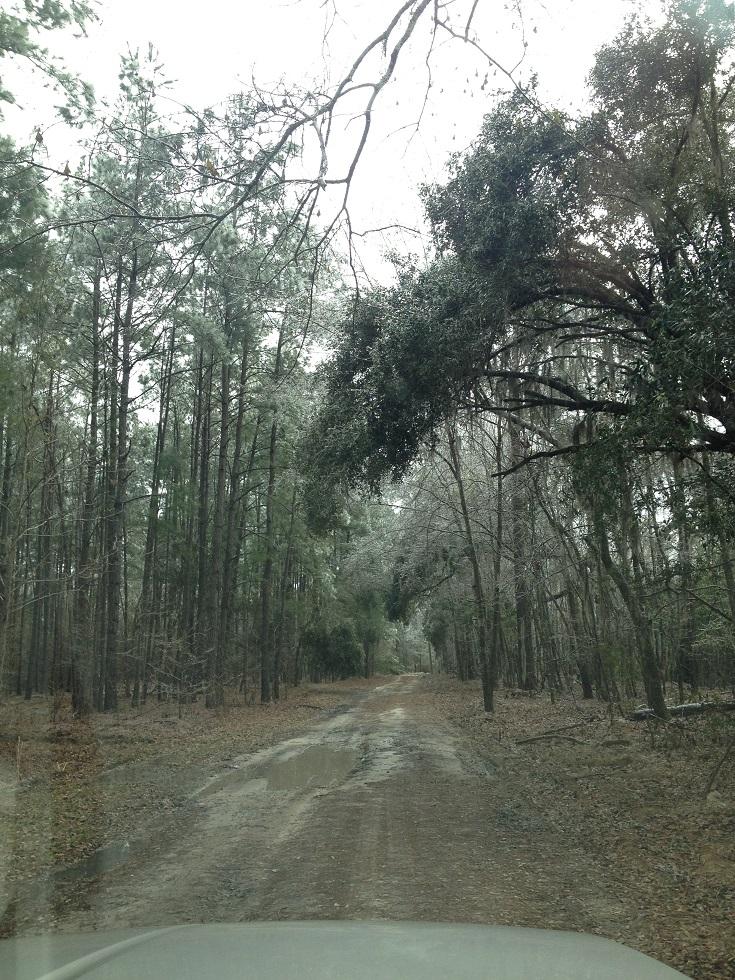 Week - ice trees 2